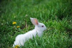 Petit lapin sur le champ Photo stock