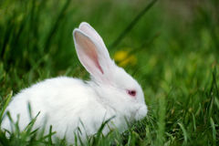 Petit lapin sur le champ Photographie stock libre de droits