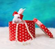 Petit lapin sur un fond blanc Photo libre de droits