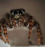 Petit macro de scarabée Photos libres de droits