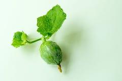 Petit melon de cantaloup Photographie stock