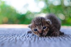 Petit mensonge de modèle de tigre de chaton Photographie stock libre de droits