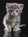 Petit minou Photo stock