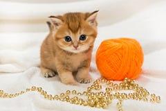 Petit minou et un écheveau de laine Photographie stock