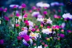 Petit monde d'abeille Image stock