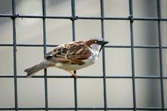 Petit oiseau Images stock
