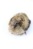 Petit oiseau Photographie stock libre de droits