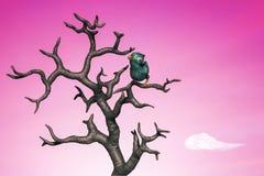 Petit oiseau bleu dans l'arbre. illustration 3d Photos libres de droits