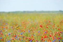 Petit oiseau chanteur en fleurs sauvages Photo libre de droits