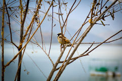 Petit oiseau dans l'arbre Photos stock