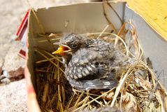Petit oiseau dans le petit panier chez Sunny Day Images stock