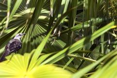 Petit oiseau de Brown dans des plantes tropicales luxuriantes photo stock