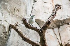 Petit oiseau exotique photo stock
