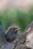 Petit oiseau mignon Images libres de droits