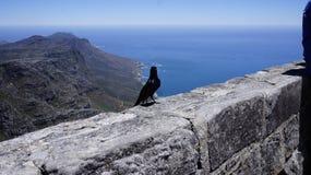 Petit oiseau noir sur un mur en pierre Photographie stock libre de droits