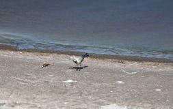Petit oiseau par l'eau image stock