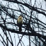 Petit oiseau puissant photographie stock