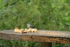 Petit oiseau sauvage Image stock