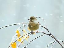 Petit oiseau se reposant en parc sur un arbre avec les feuilles d'automne du Image stock