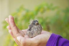 Petit oiseau se reposant main de s dans fille ' Images libres de droits