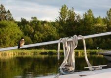 Petit oiseau se reposant sur le rail d'un bateau près de son nid fait dans t Photographie stock libre de droits