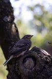 Petit oiseau sur l'arbre Image stock