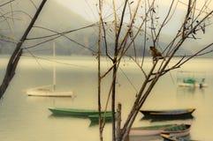 Petit oiseau sur la tache gentille Image stock