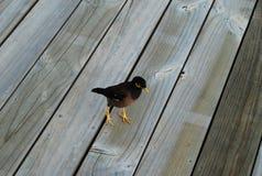 Petit oiseau sur le plancher en bois Photo libre de droits