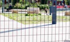 Petit oiseau sur une barrière photographie stock libre de droits
