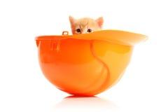 petit orange de chaton de masque Images stock