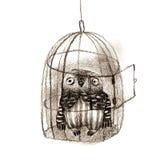 Petit Owl Sitting In une cage à oiseaux Image stock
