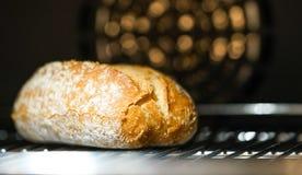 Petit pain cuit au four Photographie stock