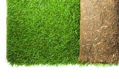 Petit pain de tapis d'herbe Image stock