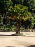 Petit palmier Photos libres de droits