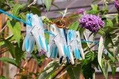 Petit papillon d'écaille sur la ligne de lavage goupilles Photos stock