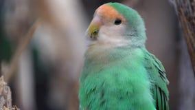 Petit perroquet en parc national clips vidéos