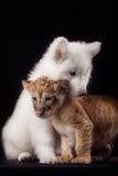 Petit petit animal de lion et chiot blanc Image stock