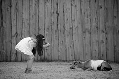 Petit photographe Photo stock