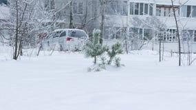 Petit pin en gelée Photographie stock libre de droits