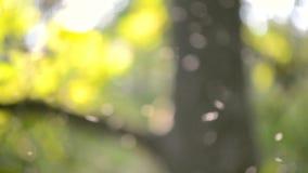 Petit plan rapproché blanc brouillé de moucherons d'insectes de fond en air dans la forêt banque de vidéos