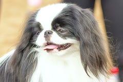 Petit plan rapproché de chien Photographie stock