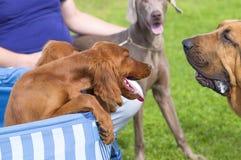 Petit plan rapproché de chien Photo libre de droits