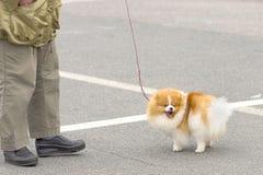 Petit plan rapproché de chien Image stock
