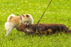 Petit plan rapproché de chien Photos libres de droits
