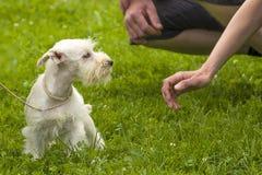 Petit plan rapproché de chien Photographie stock libre de droits