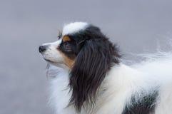 Petit plan rapproché de chien Images stock