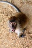 Petit plan rapproché de singe Photographie stock