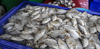 Petit poisson de mer Images libres de droits