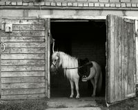 Petit poney Image libre de droits