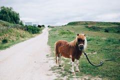 Petit poney au milieu de la route de campagne photo libre de droits